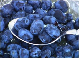 Haskap-Berries on spoon