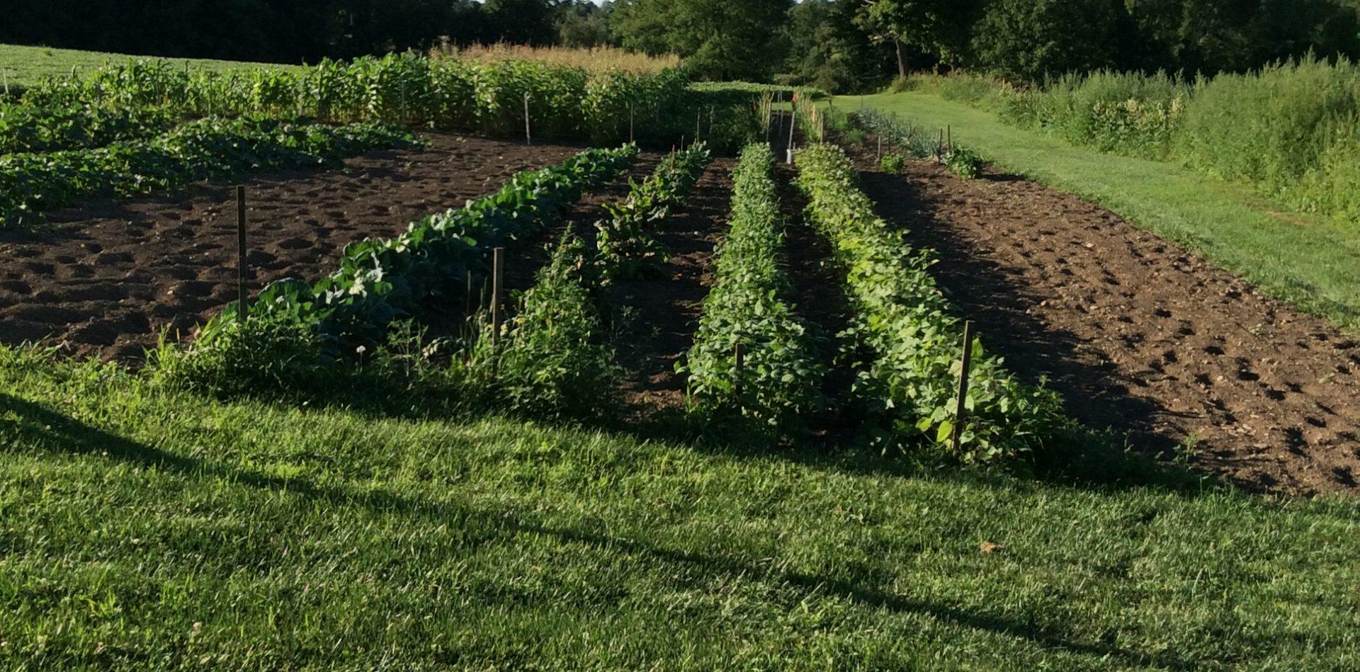 Loiacono Farm LLC